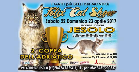 Felix Cat Show A Jesolo i gatti più belli del mondo, sabato 22 e domenica 23 aprile 2017 al pala Arrex